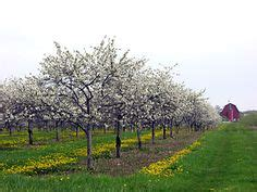 Cherry Orchards In Door County Wi by 1000 Images About Above The Fruited Plain On