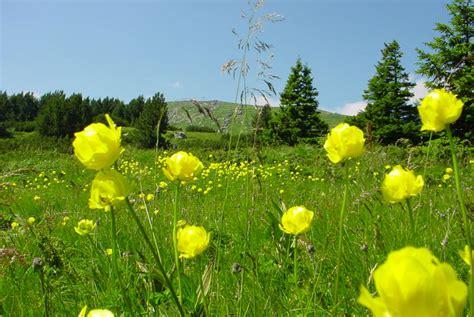 Flower Mountain mountain flowers in bulgaria