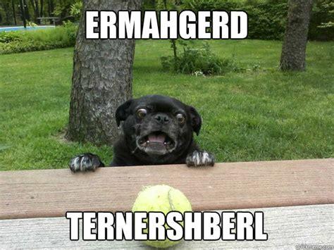 berks dogs berks cachorro latindo para bola 233 o novo hil 225 meme da web not 237 cias