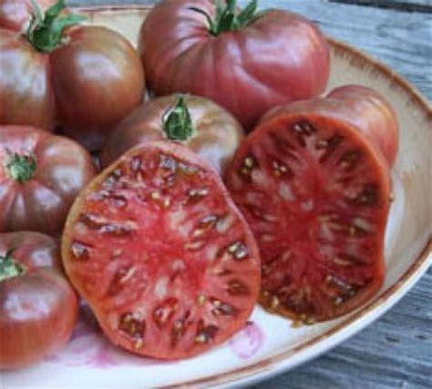 Bibit Bunga Matahari Di Jogja tomat jenis purple 2 benih toko benih tanaman