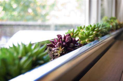 Windowsill Garden Windowsill Garden Herbs Images