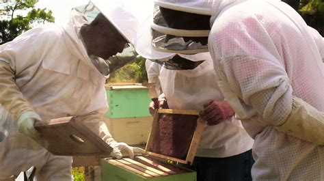 backyard beekeepers association backyard beekeepers are buzzing wlrn
