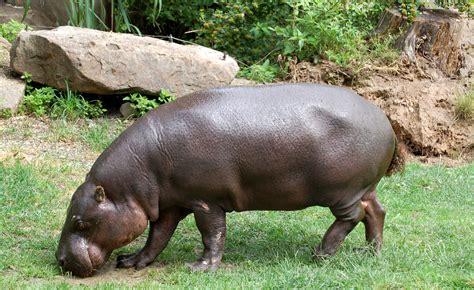 Animal World 4 10 endangered animals in africa smashing tops