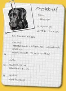 Steckbrief schaeferhund collie sammy pictures to pin on pinterest