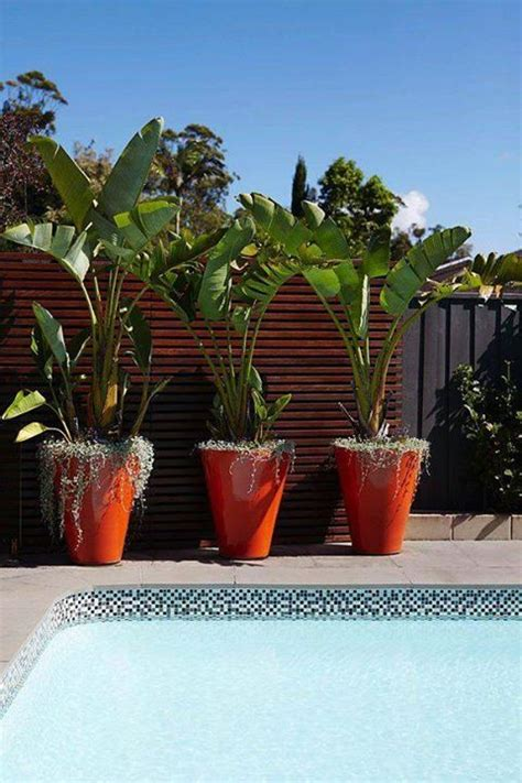 blumentopfe jardineria en macetas