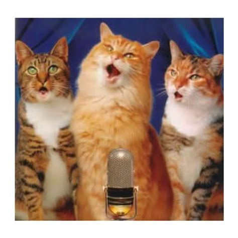 cat singing the singing cats your favorite tunes in 3 part harmony