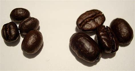 Kopi Lanang Lanang Coffe kopi lanang peaberry ghora coffee yogyakarta supplier kopi jogja i ghora