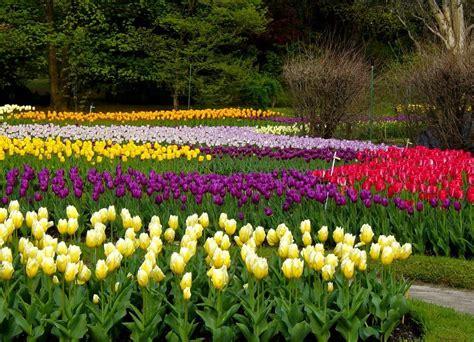 fiori da giardino fiori giardino piante da giardino come scegliere i