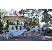 Wedding Horse And Carriage  Open Or Closed
