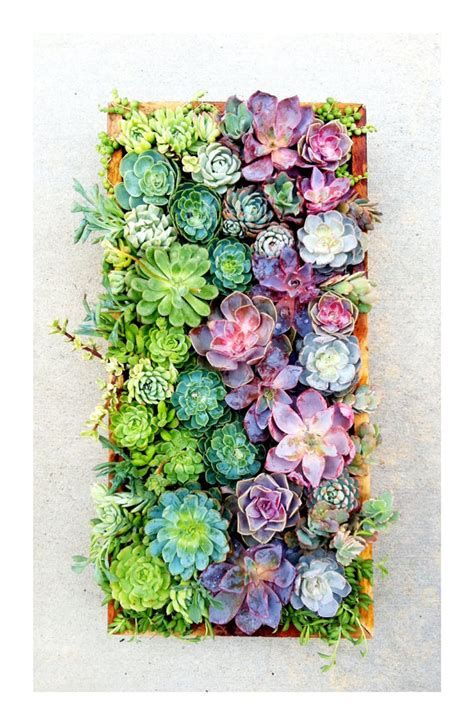 succulent garden wall the rikrak studio my favourite things vertical