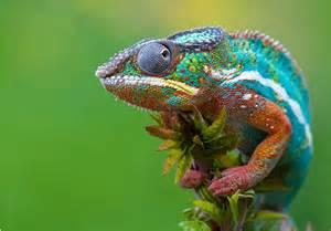 colorful chameleon jimena m 225 gica aqu 237 escribe jimena m 225 gica