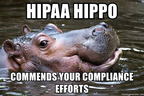 Hippo Meme - hipaa hippo commends your compliance efforts hipaa hippo