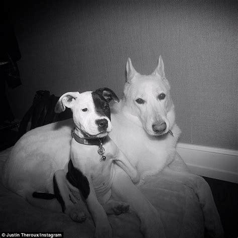 justin theroux dog jennifer aniston and justin theroux to sort dog custody