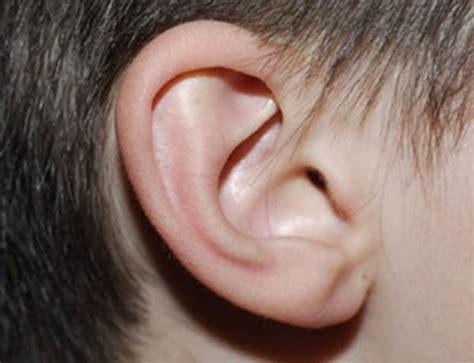 imagenes animadas orejas 191 las orejas mejor que las huellas dactilares para la