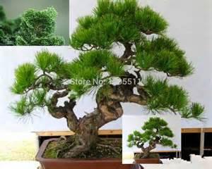 aliexpress buy mini potted 20 bonsai tree seeds