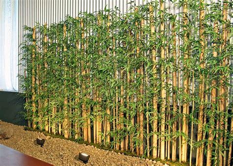 bamboo in backyard mall silks gallery