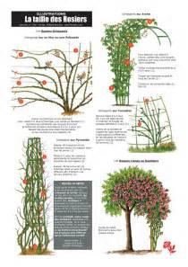 les 25 meilleures id 233 es concernant plantes grimpantes sur