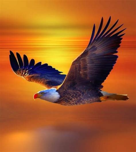 eagles colors soaring eagles no time for silence
