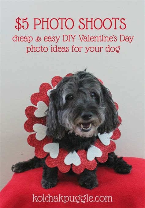 Best Easy Cheap Detox For Dogs by 5 Photos Shoots Easy Diy S Day Photos