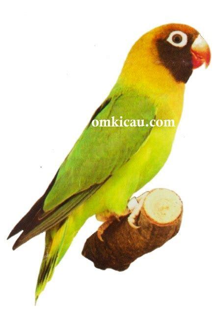 gambar desain lovebird gambar sangkar burung branjangan blog images
