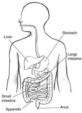 appendix location diagram appendix location and surgical removal