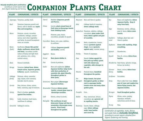 Companion Plants Vegetable Garden On To Companion Planting Uk Weather Forum
