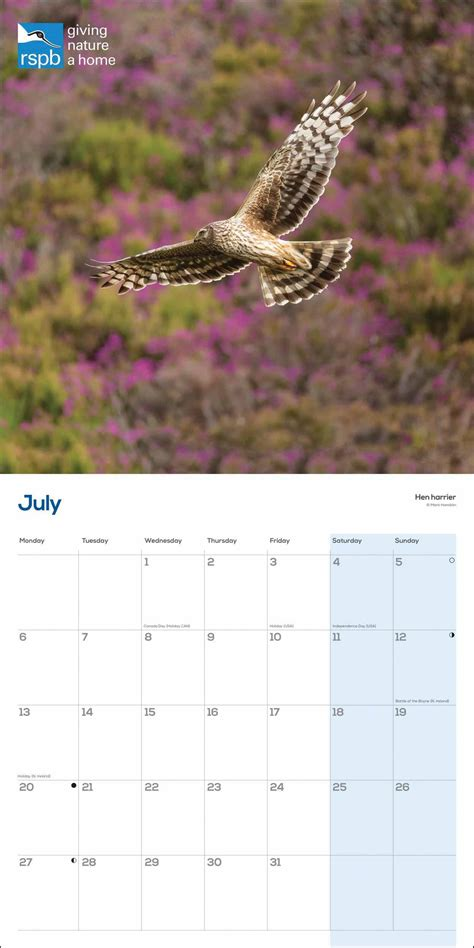 rspb birds  prey calendar  calendar club uk