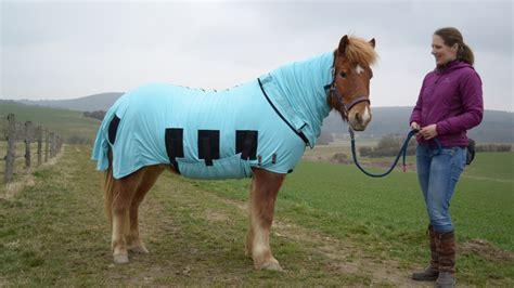 Decke Juckt es juckt m 252 cken verursachen ekzem bei pferden ratgeber