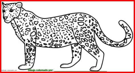 imagenes de jaguares para dibujar dibujo de jaguar para colorear e imprimir