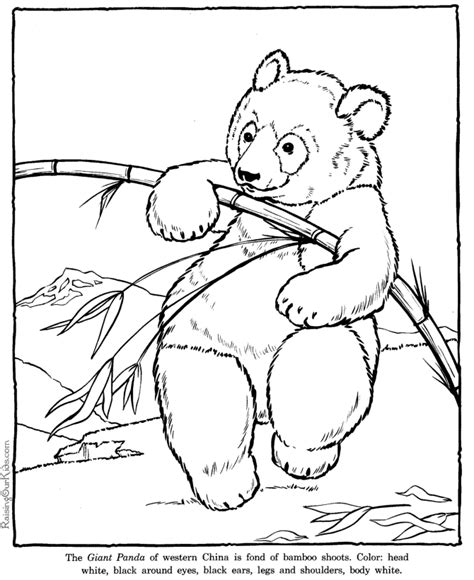 giant panda coloring pages zoo animals