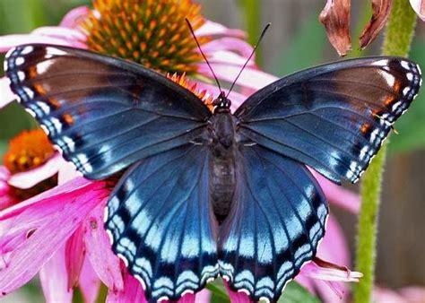 Pengorbanan Seekor Kupu Kupu anak kupu kupu emas yang sombong dunia dan