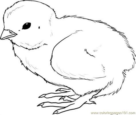 coloring pages of baby chicks how to draw a chick step 4 coloring page free chick