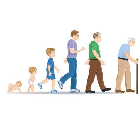 imagenes del ciclo de la vida humana etapas de la vida etapas de la vida humana