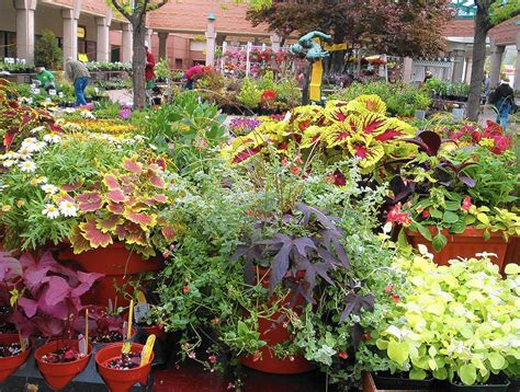 plant sale savvy experts share shopping tips