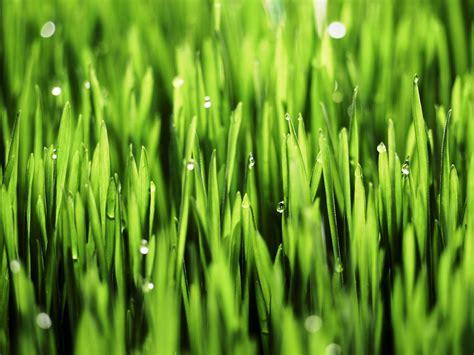 impressive benefits  wheatgrass