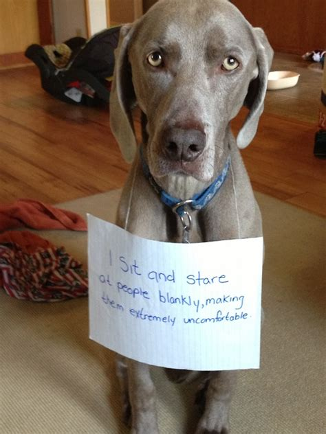Funny Dog Shaming   Cute Animal Pictures