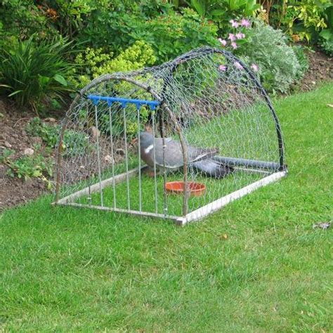 how to catch pigeons for fourteenacre prop pull pigeon trap