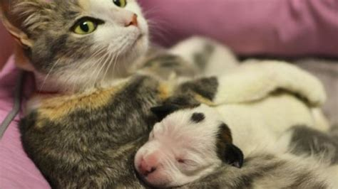 newborn puppies dying the cat saved the newborn pup as he was dying truly