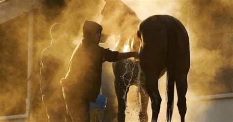 For Horses Bathroom by How To Bathe Your 5 Tips To Do It Right