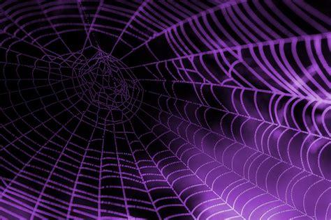 www web purple spider web background