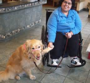 creature comforts ann arbor belle the therapy dog gives young woman independence and
