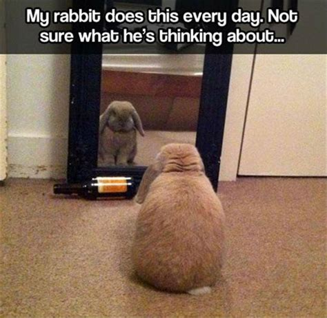 Funny Rabbit Memes - 20 best images about funny rabbit memes on pinterest