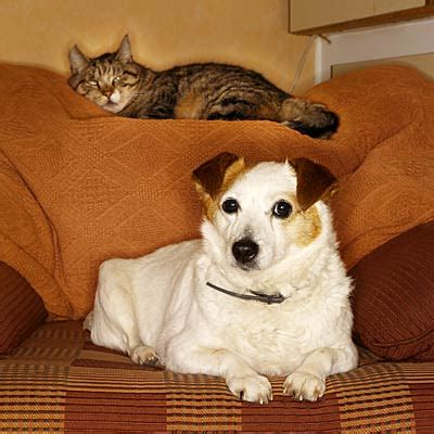 best way to get dog hair off comforter keep fluffy off the couch how to reduce pet allergens at