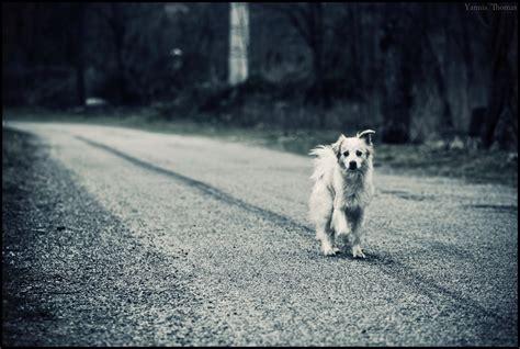 stray puppy stray by ishmakey on deviantart