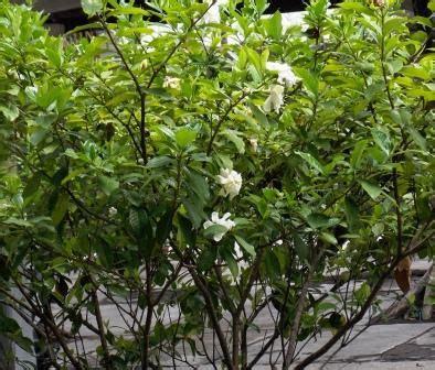 inilah khasiat tersembunyi dibalik kecantikan bunga