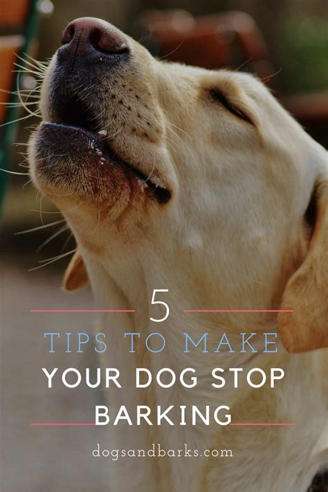 how to make stop barking 5 tips to make your stop barking dogs and bark