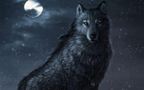 Imagenes Lobo Negro | lobo negro im 225 genes y fotos