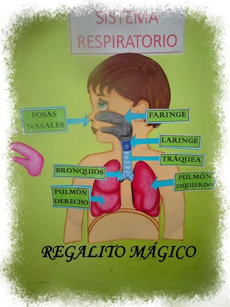 youtobe videos cmo nacer maqueta sistema respiratorio como hacer una maqueta del sistema respiratorio maquetas