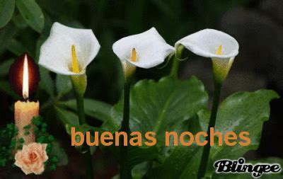imagenes buenas noches con flores buenas noches picture 95985438 blingee com