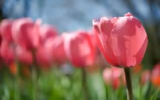 Flower In Bloom blooming spring flowers blooming flowers crafthubs